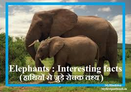 Amazing Fact About Elephant