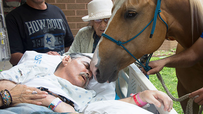 36 People's Heart-Breaking Last Wishes - Dying Vietnam Vet Asks For A Final Meeting With Beloved Horses Outside Hospital
