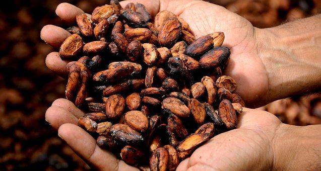 cara membuat coklat dari biji kakao asli di rumah