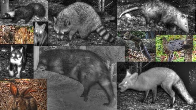 Backyard Wildlife Camera Time Lapse