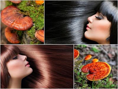 Sử dụng nấm linh chi đỏ cải thiện mái tóc hiệu quả