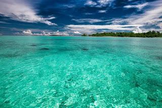 Zona Neritik, Ikan, Folra Fauna Neritik, Ekosistem