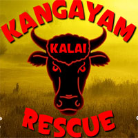 Wow Kangayam Kalai Rescue…