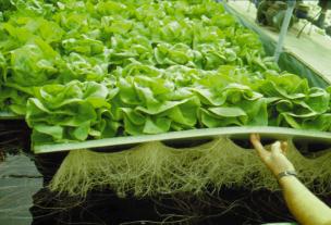 الزراعة فوق الاسطح