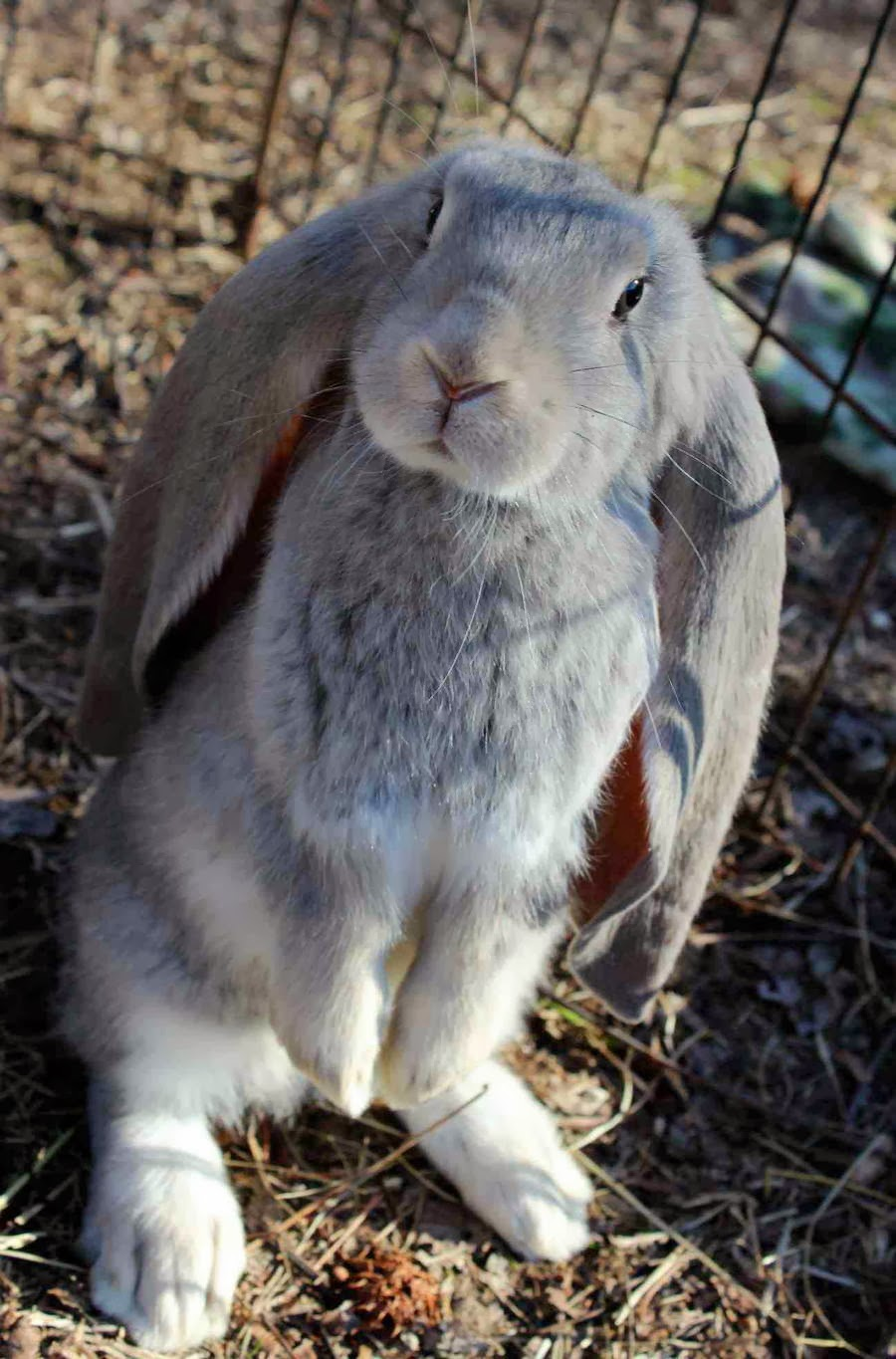 Funny animals of the week - 21 February 2014 (40 pics), rabbit with long ears