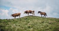 Livro Doenças de Ruminantes e Equinos (Volume 1) em PDF