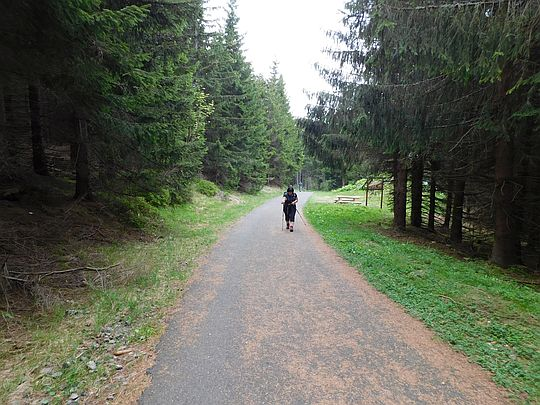 Szlak na Sowią Przełęcz.