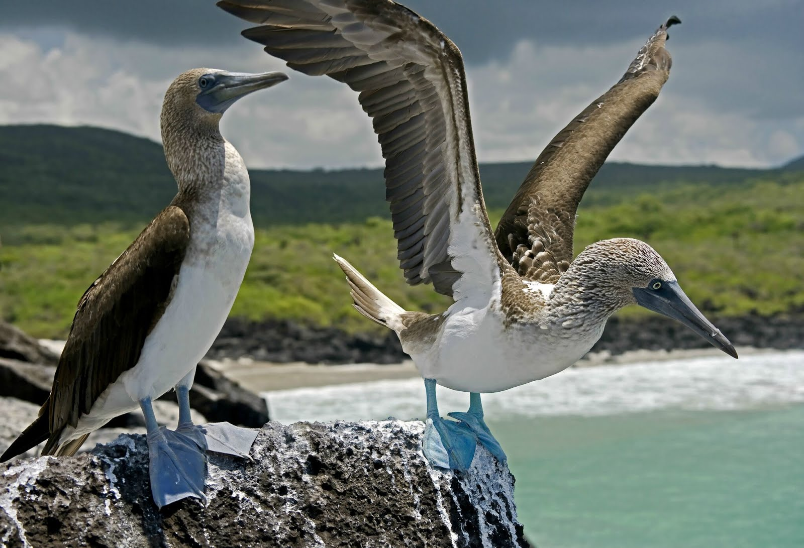 Image result for cruising galapagos images