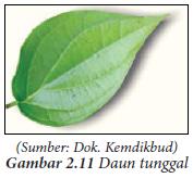 Menggambar Ragam Hias Flora (vegetal)