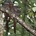 Relatório aponta 381 novas espécies de plantas e animais na Amazônia