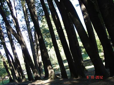 Tree-meet