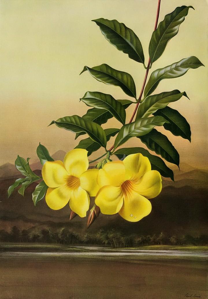 Paul Jones. Акварельные рисунки цветов 7