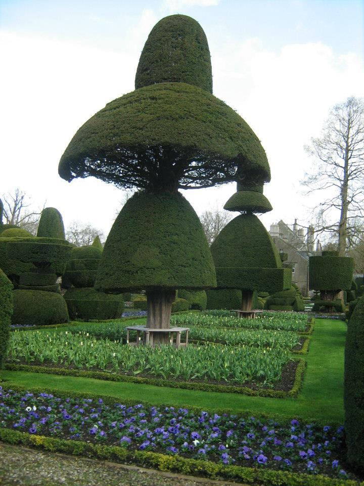 "Topiary Garden. Levens Hall. ""The Great Umbrella"""