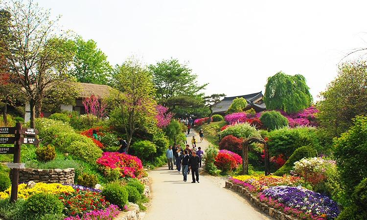 2019 아침고요수목원 봄나들이 봄꽃축제