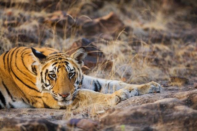 Sundarbans National Park - Natural World Heritage Sites in India