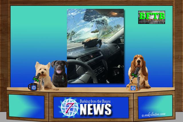 BFTB NETWoof News desk with turtle crashed through windshield on back scrren