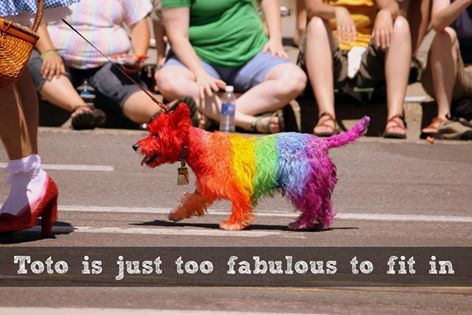 Toto in rainbow