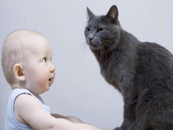 خبراء يكشفون علاقة الموت المفاجئ للأطفال الرضع بالقطط