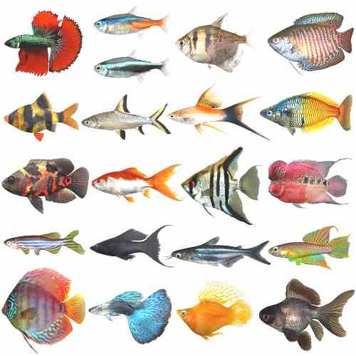 Gambar Ikan Hiu Yg Cantik