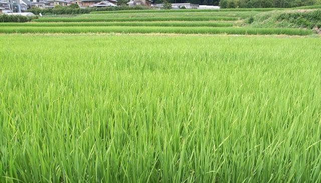 Alasan mengapa generasi muda saat ini enggan terjun ke sector pertanian