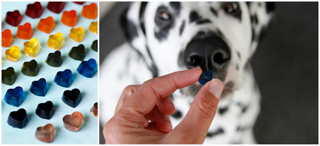 Dalmatian dog with gelatin gummy dog treats shaped like hearts in a rainbow of colours
