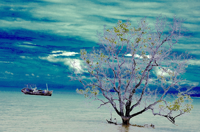 mare albero nave