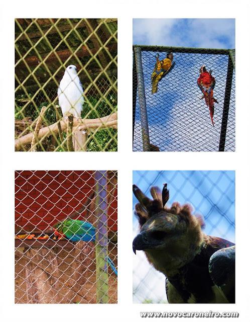 Jardim Zoológico de Curitiba, Paraná. Um  zoo simples, mas muito bem organizado. Apresenta diversos mamíferos, como leões, girafas, tigres, onças, macacos. Tem setores específicos com grande quantidade de aves. Os cenários são muito bem explorados.