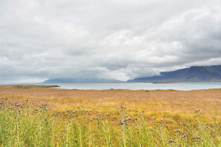 Découverte de l'île de Viðey à Reykjavik