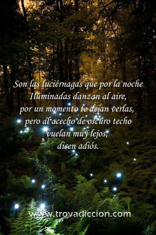 Son las luciérnagas que por la noche Iluminadas danzan al aire, por un momento te dejan verlas,  pero al acecho de oscuro techo vuelan muy lejos,  dicen adiós.