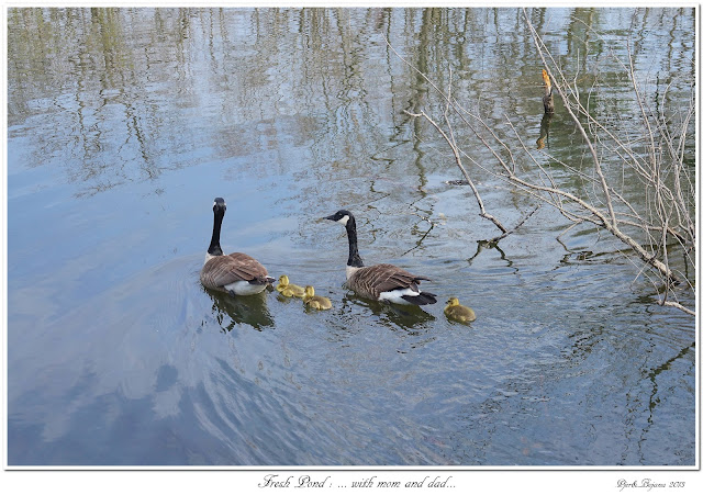 Fresh Pond: ... with mom and dad...