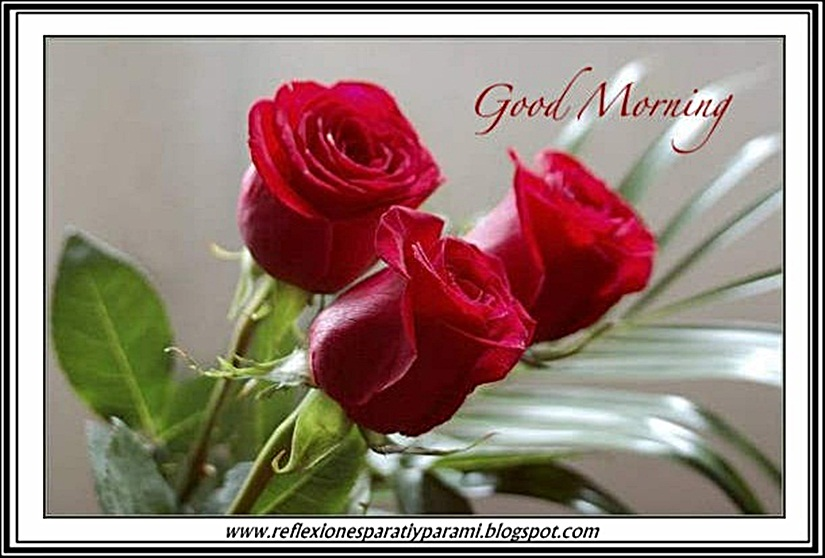 Good Morning Mi Amor Images : Imagenes good morning mi amor wallpaper images