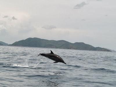 imagen delfin tour a las isla de Mochima