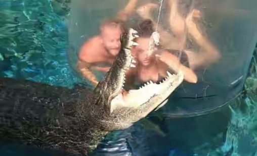 Fearless divers go face to face with huge 16ft crocodiles
