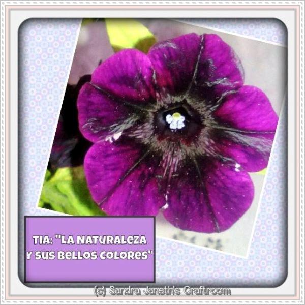 Flores, Naturaleza