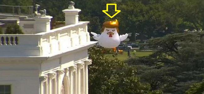Globo gigante de una gallina con la cara de Trump
