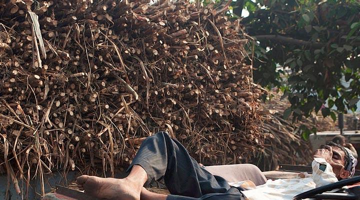 sugarcane%2Bfarmer%2Bindia