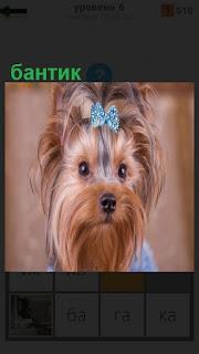Симпатичная собака сидит с бантиком на голове синего цвета