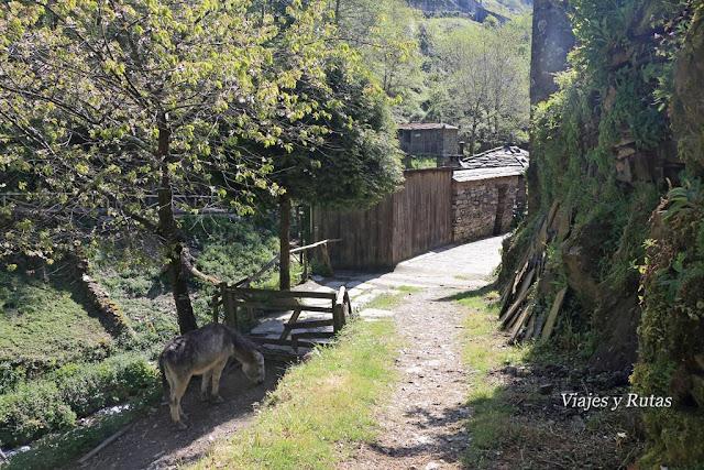 Bajada a Os Teixois, Taramundi, Asturias