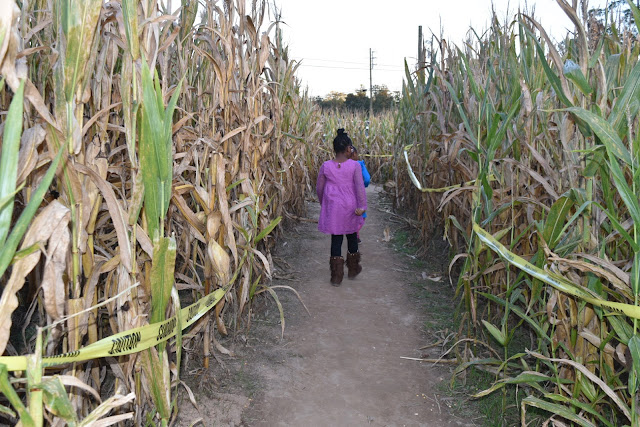 Running Around in a Corn Maze Sporting FabKids  via  www.productreviewmom.com