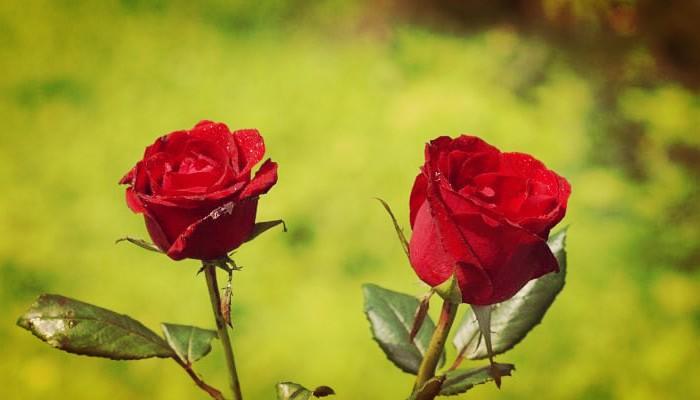 Flores y jardines