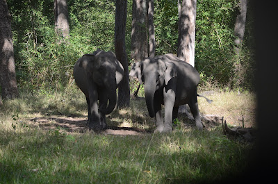 wild elephants nagarhole
