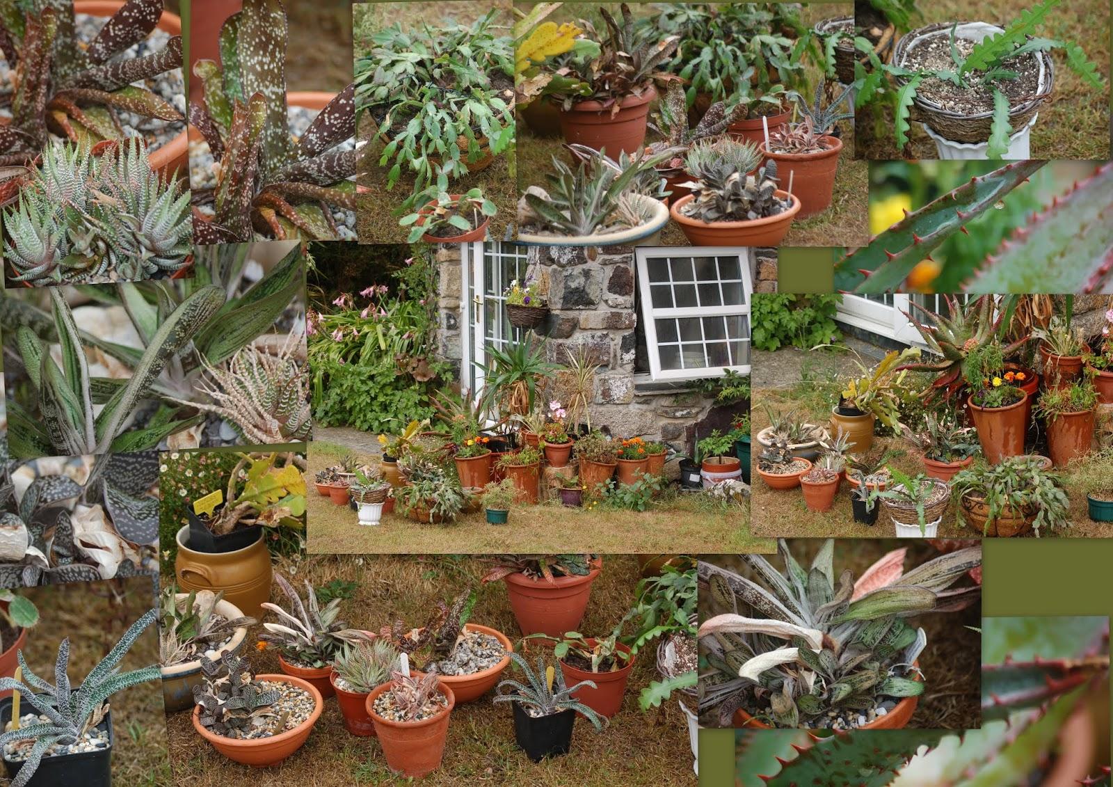 Daisy Deb\'s Garden: Hot and dry , then comes the rain !