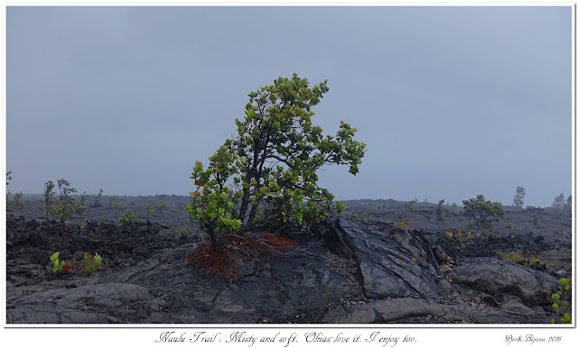 Naulu Trail: Misty and soft. Ohias love it. I enjoy too.