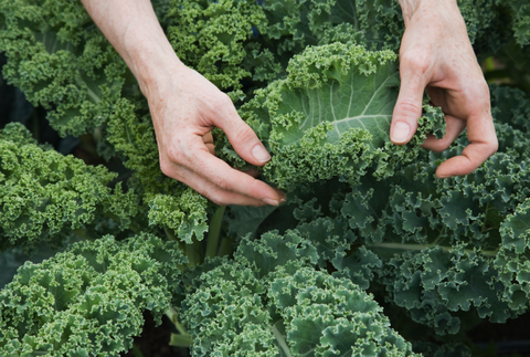 Nutritionist says kale tin post your thyroid haywire together with quinoa irritates the gut Why so-called 'superfoods' could hold upwardly BAD for you: Nutritionist says kale tin post your thyroid haywire together with quinoa irritates the gut