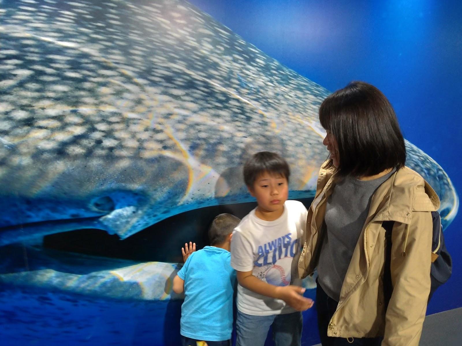 ジンベイザメの写真で一枚