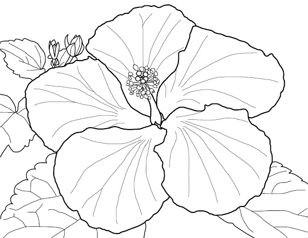 Hibiscus Flower Coloring Pages Printable  Best Images Of Free Printable  Hibiscus Flower Outline
