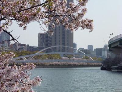 桜と飛翔橋