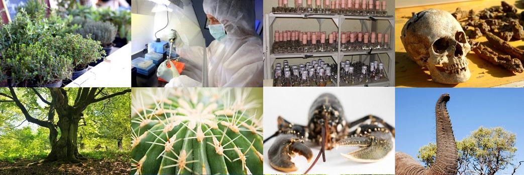 Investigação Científica em Biologia
