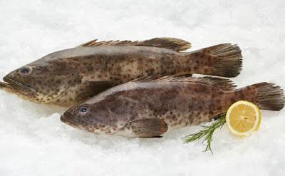 Frozen Grouper Exporters