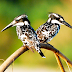 The 16 best places in the world to see birds